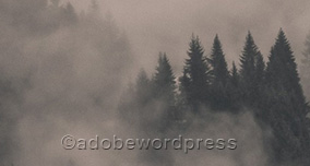wordpress filigran WordPresste Resimlere Filigran Ekleme
