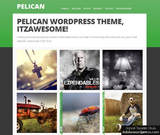 Pelican WordPress Teması