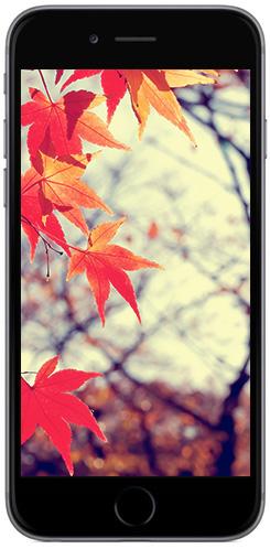 iphone6-screenshot-11